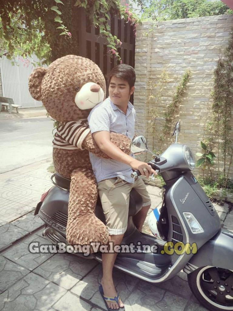 Gấu Bông Teddy Nhập Ngoại Cao Cấp